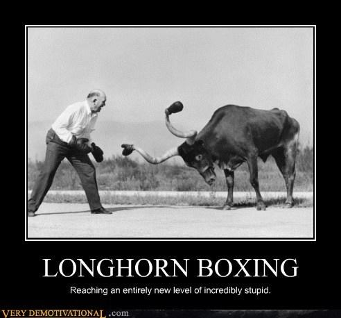 longhorn,wtf,boxing,idiots