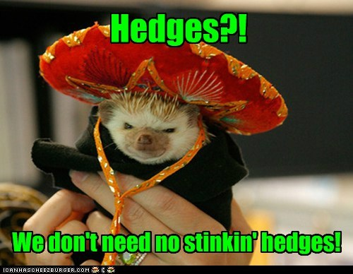 treasure,hedgehog