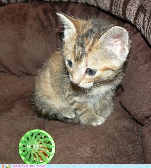toy jingle kitten