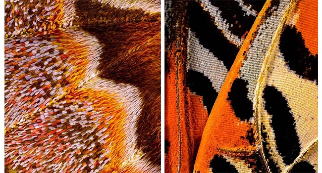 animal photos butterfly microscopic wings animals - 7411205