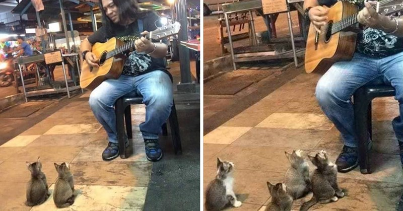 so cute adorable kitten unexpected Video beautiful musicians - 7411461