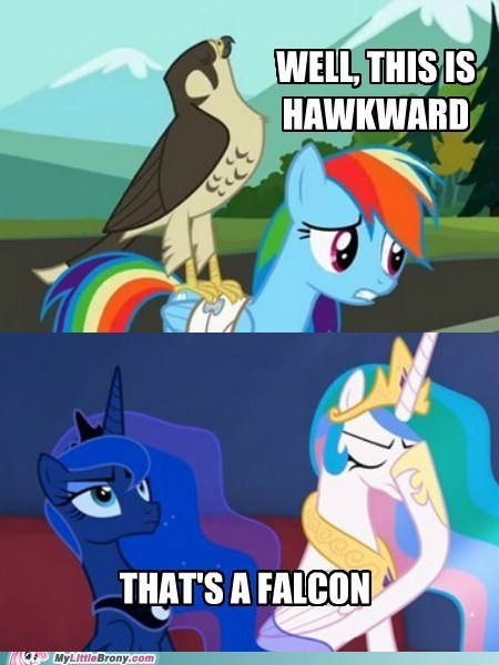 facehoof,Awkward,puns,celestia,rainbow dash