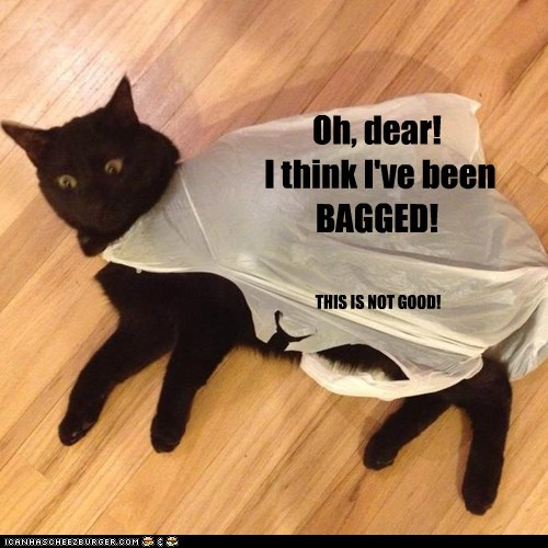 Oh, dear! I think I've been BAGGED! THIS IS NOT GOOD!