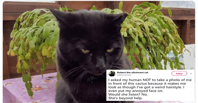 tweet by a cat annoyed at his owner