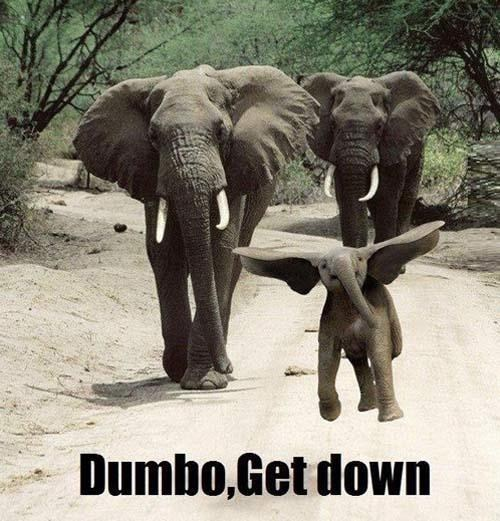 elephants dumbo - 7414149632