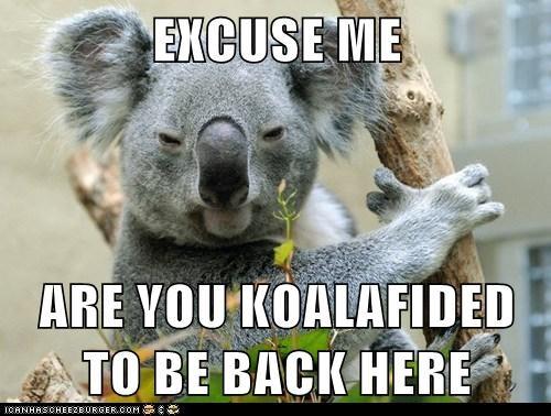 nap,koala