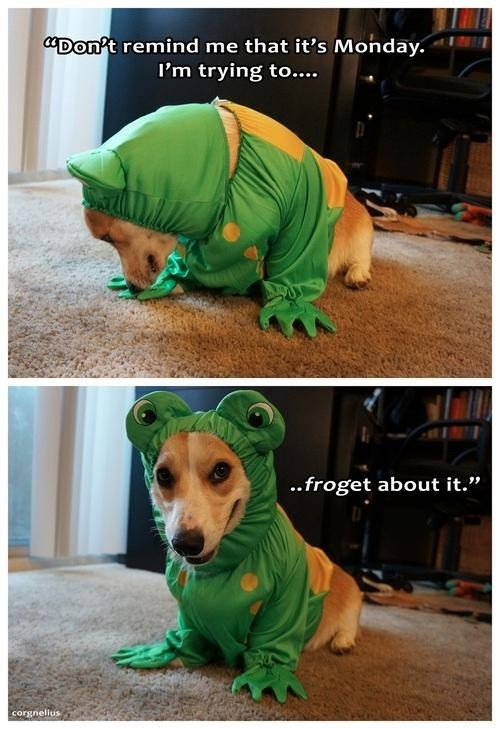 comic,frog,monday