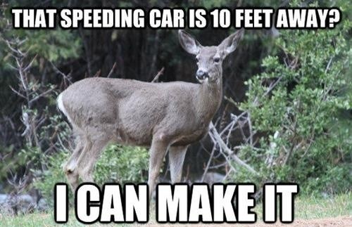 cars deer funny - 7414446848