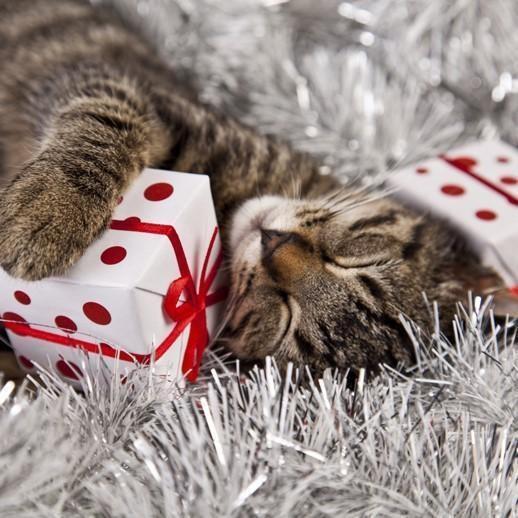 christmas gifts pets - 7414789