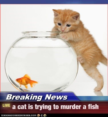 Breaking News - a cat is trying to murder a fish