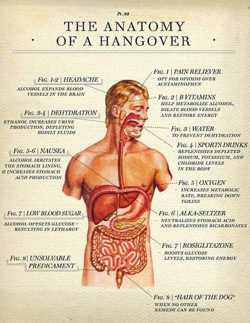 anatomy science hangover after 12 g rated