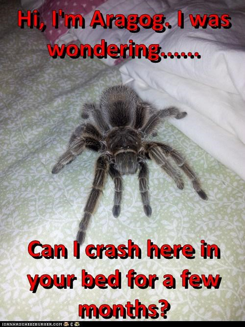 spiders how about no aragog - 7415209216