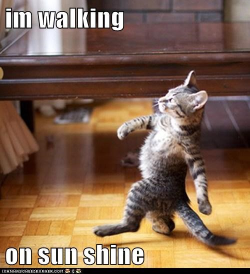 walking on sunshine,cat