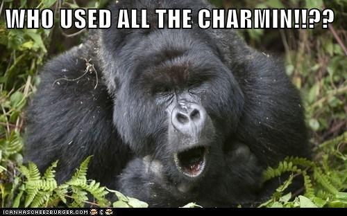 toilet paper funny gorilla - 7420164352