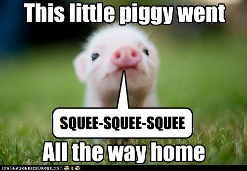 pig,squee