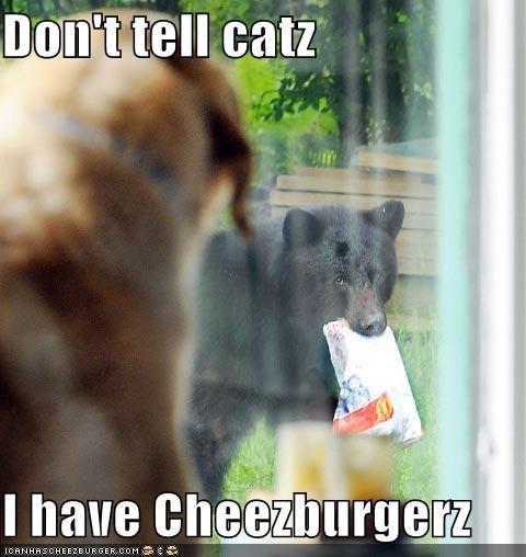 Cheezburger Image 742092544
