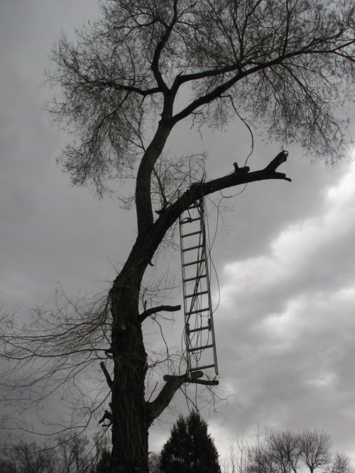 trees,ladders,funny,there I fixed it
