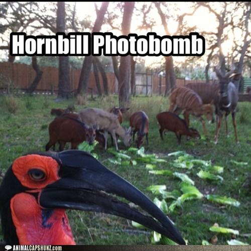 hornbill,bird