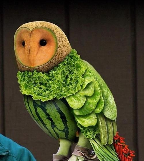 wtf,birds,owls,fruit