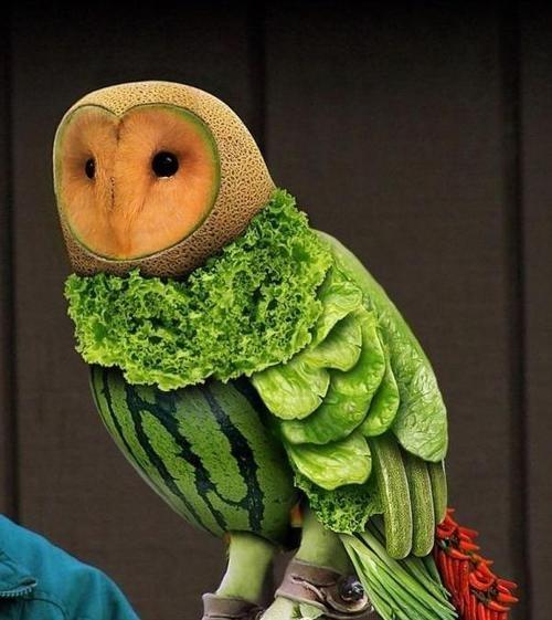 wtf birds owls fruit - 7421637120