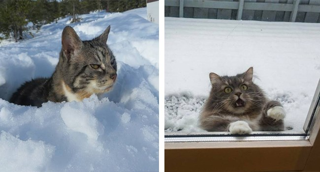 cats hating snow