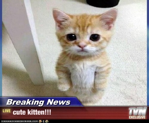 Breaking News Cute Kitten Lolcats Lol Cat Memes Funny Cats Funny Cat Pictures With Words On Them Funny Pictures Lol Cat Memes Lol Cats