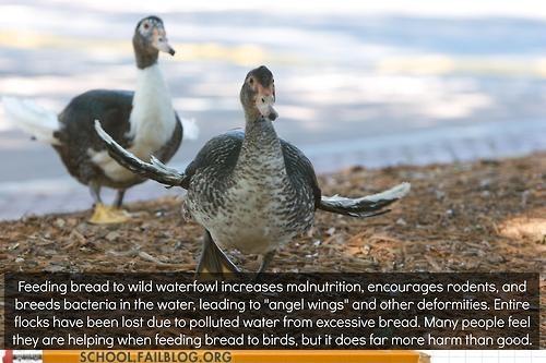 birds ducks bread science g rated School of FAIL - 7422564096