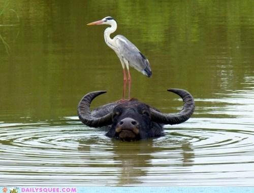 life crane water buffalo - 7422578688