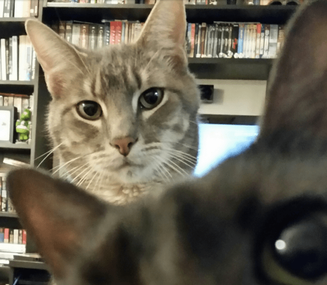 Here's Proof That Cats Are Pros at Photobombing
