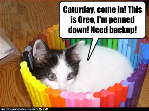 Caturday, come in! This is Oreo, I'm penned down! Need backup!