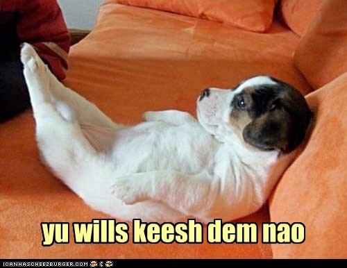 puppy feet - 7424708352