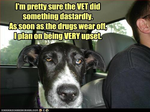 drugs vet funny - 7424826624