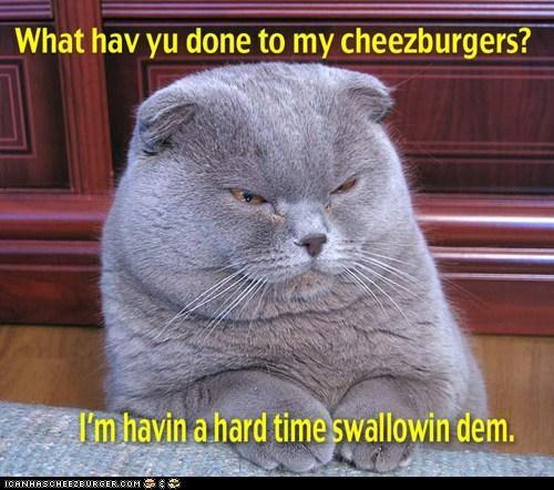 Cheezburger Image 7425584896
