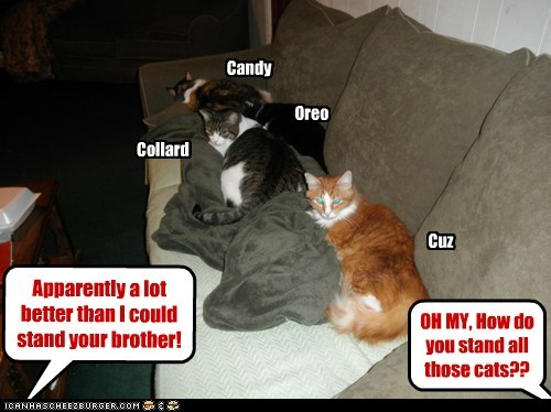 OH MY, How do you stand all those cats?? Apparently a lot better than I could stand your brother! Candy Oreo Collard Cuz