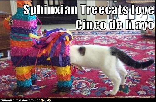 Sphinxian Treecats love Cinco de Mayo