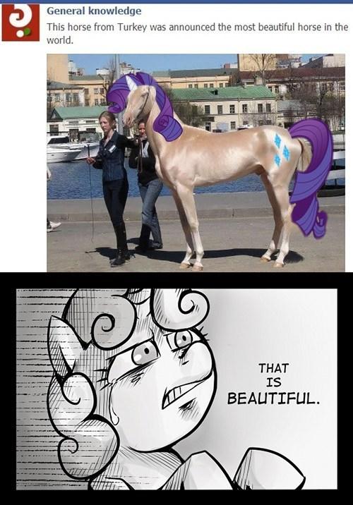 Sweetie Belle rarity horses - 7428572416
