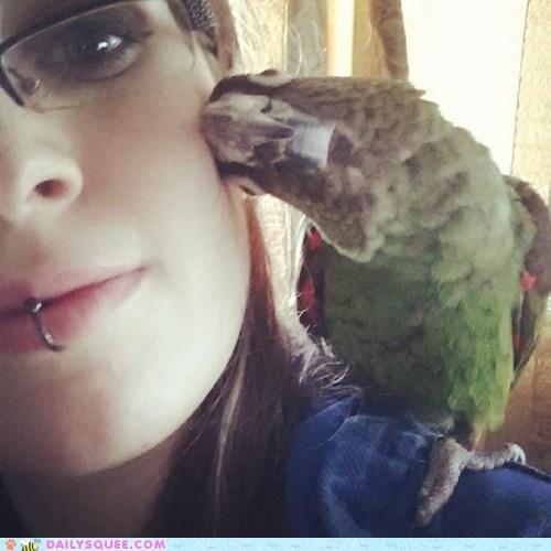 boop bird