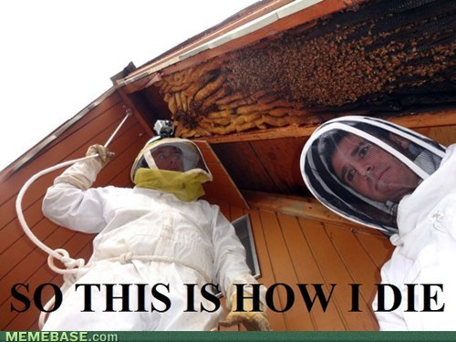 this is how i die,bees
