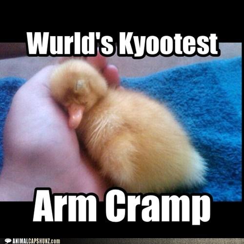 cramp duckling cute - 7431086848