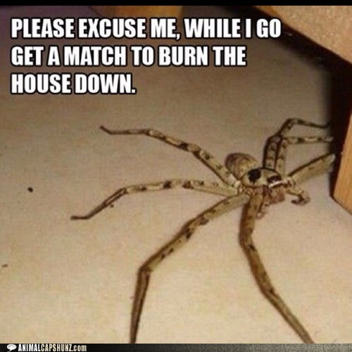 spiders,brb