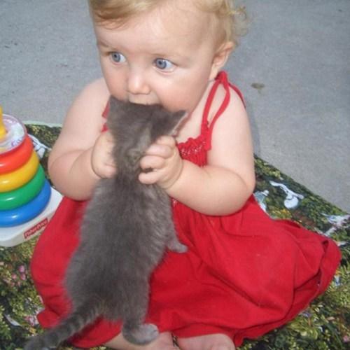 Babies kitten funny - 7431767552