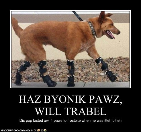 HAZ BYONIK PAWZ, WILL TRABEL Dis pup losted awl 4 paws to frostbite when he was itteh bitteh