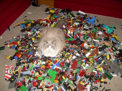 legos comfortable Cats funny - 7432561152