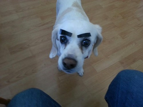 eyebrows angry eyes - 7432761600
