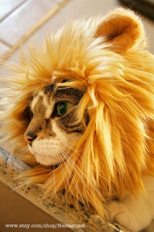 costume,lion,little