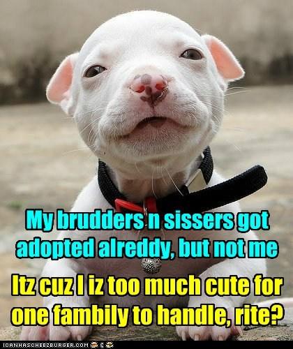 puppy cute adopted - 7432838400