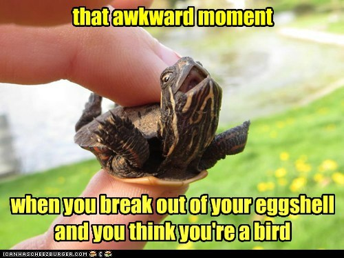that awkward moment turtle eggshell funny - 7432879360