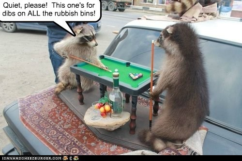 pool,rubbish,raccoons