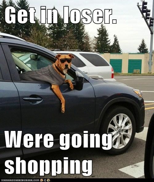 get in loser mean girls dogs funny - 7433320960