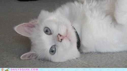 cat cute - 7433438208